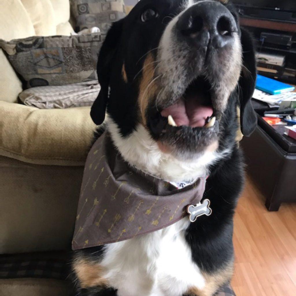 Large Dog Wearing Arrow Print Grey Bandana